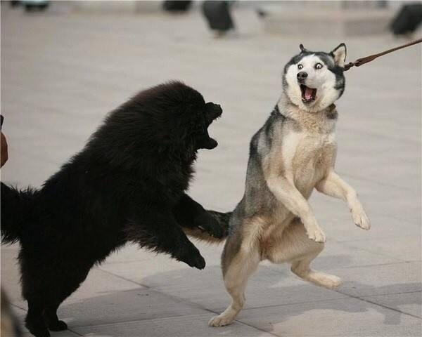 狗狗为什么会突然咬人?狗狗咬人有哪些原因